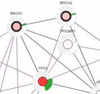 Network of genomic alterations in Serous Ovarian Cancer